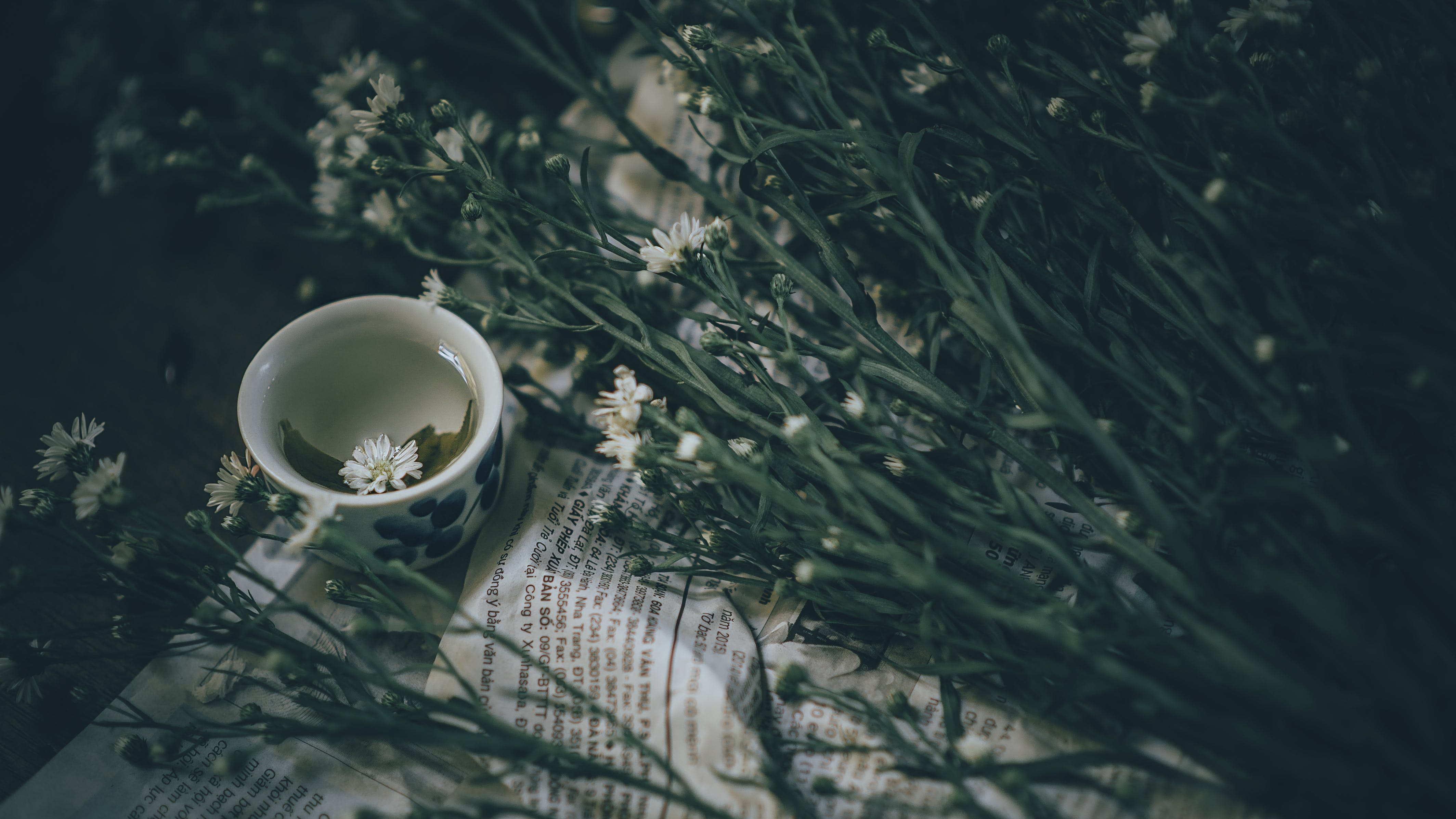 Ceramic Teacup Near White Flowers With Plant