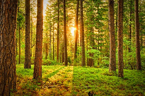1000+ Interesting Green Forest Photos · Pexels · Free