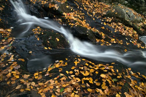 Gratis stockfoto met Bemoste rotsen, beweging, bladeren, cascade