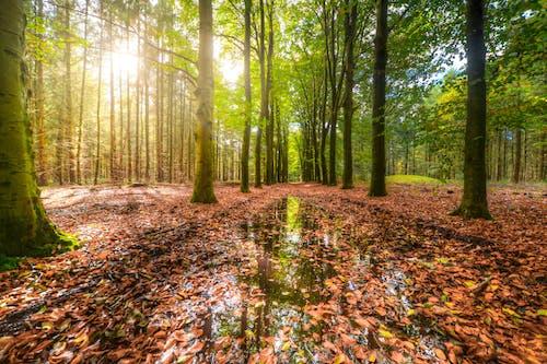 Photos gratuites de arbres, chemin, dehors, environnement