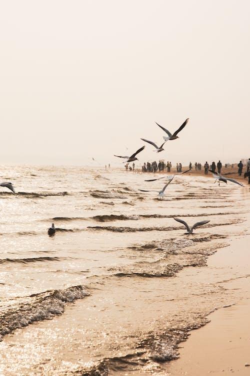 Flock of Birds Flying on Shore