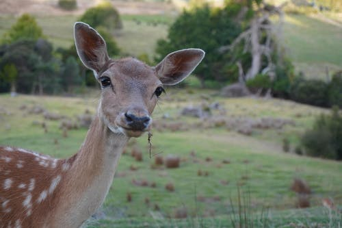 Free stock photo of animal, Beautiful animal, deer