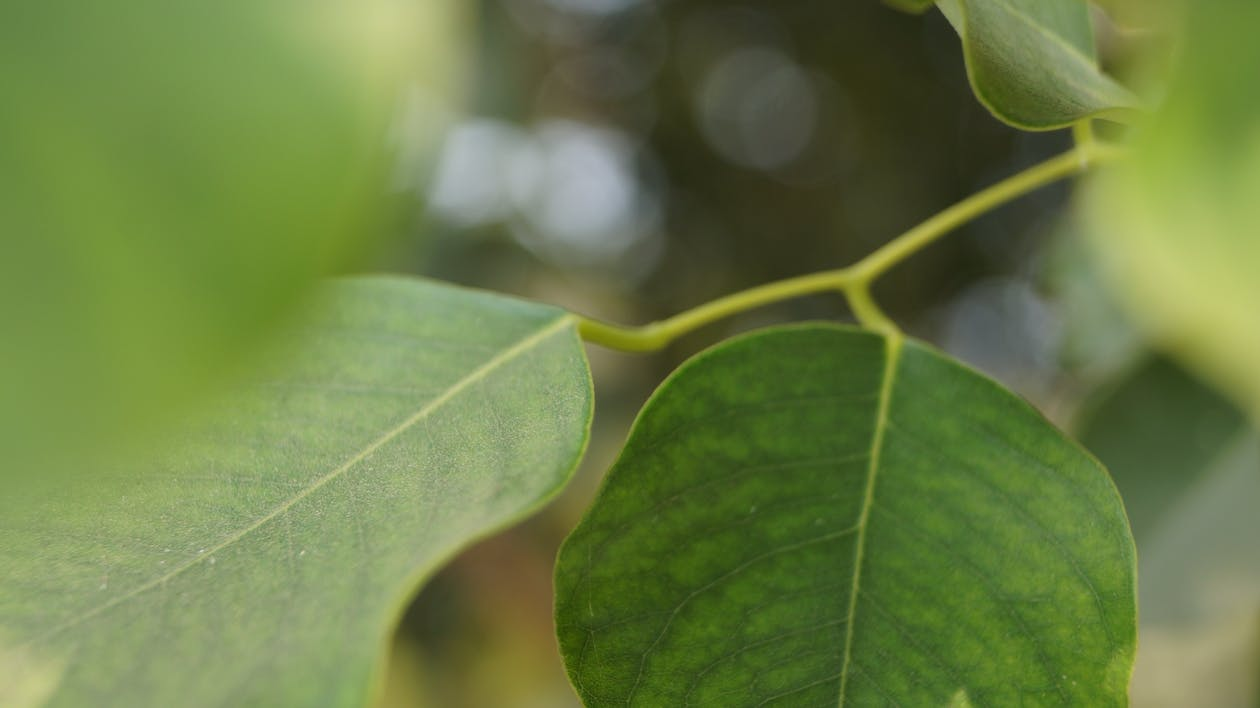 Free stock photo of nature leaf, tree