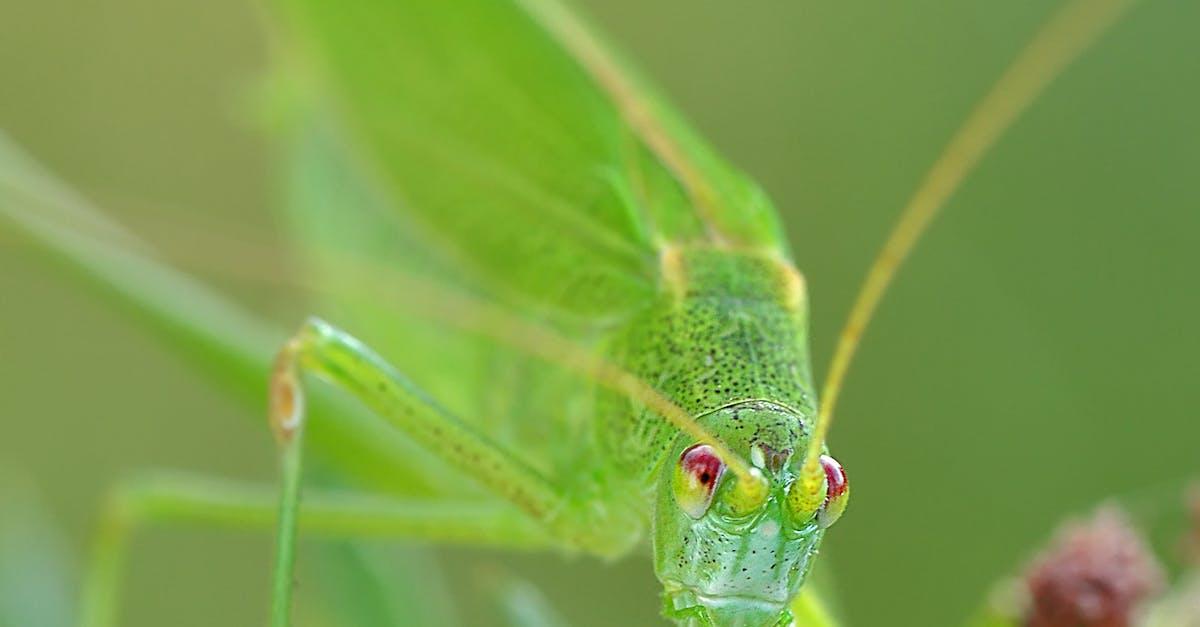 Green Grasshopper Macro Photography · Free Stock Photo