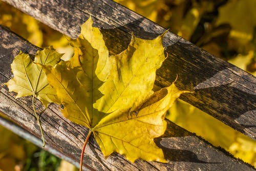 Gratis lagerfoto af farve, natur, naturfotografering