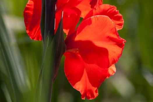 Red Flowerss
