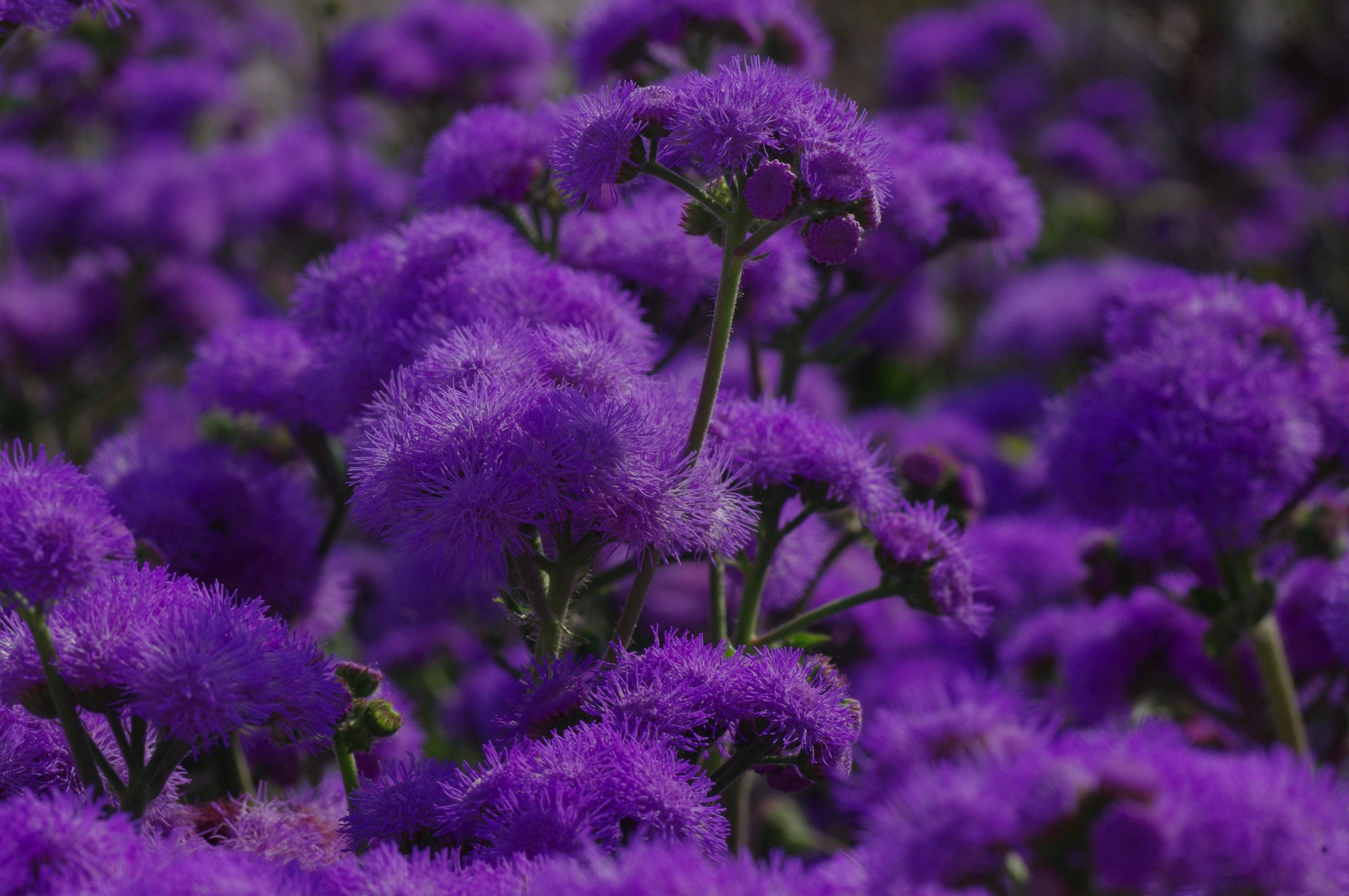Purple Flower in Focus Photography