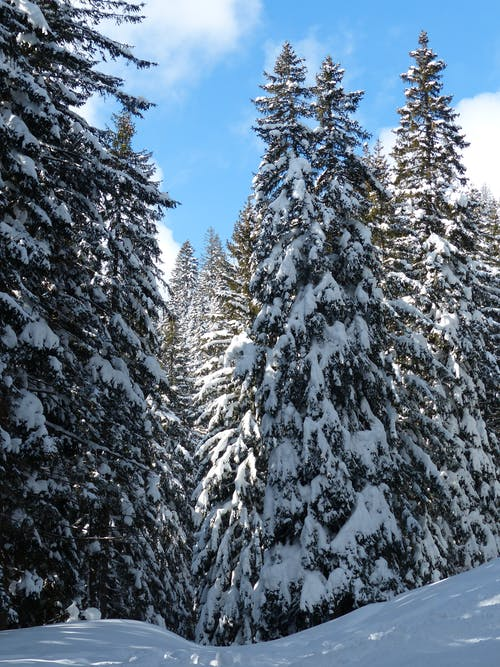 Ingyenes stockfotó fák, fehér, hideg, hó témában