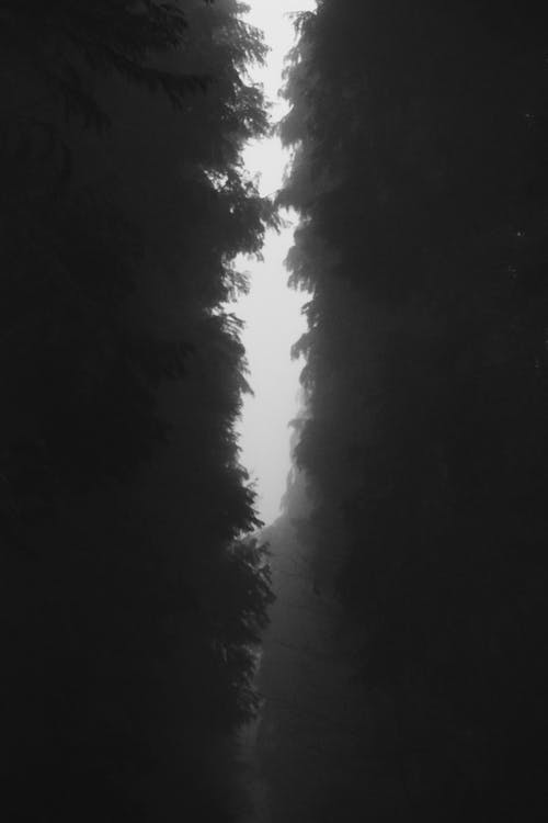 Free stock photo of dark, forest