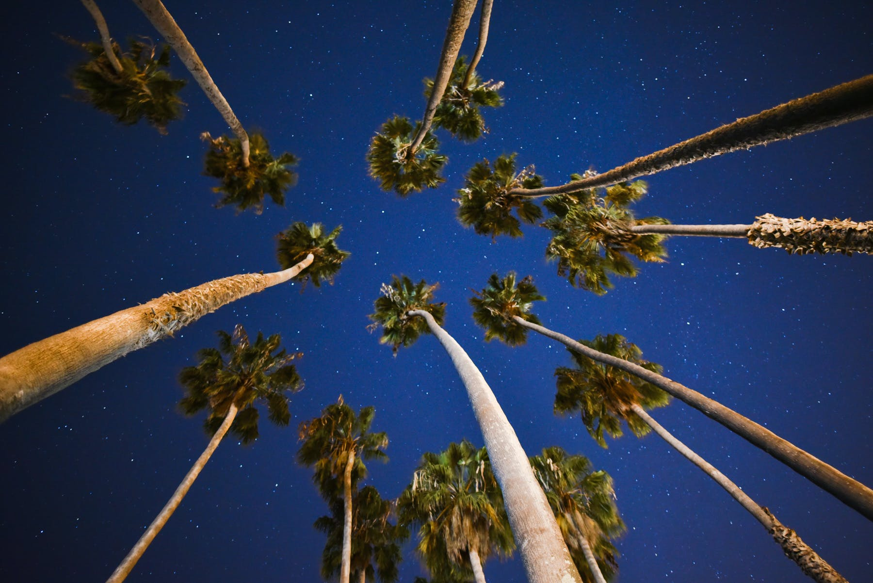 Palm Trees Under Blue Skies With Stars at Nigh Time