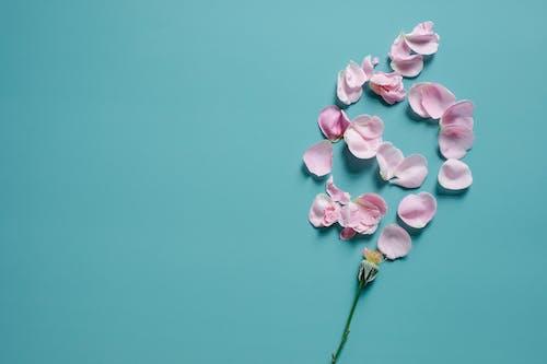 Gratis stockfoto met aromatisch, blauwe achtergrond, bloeien