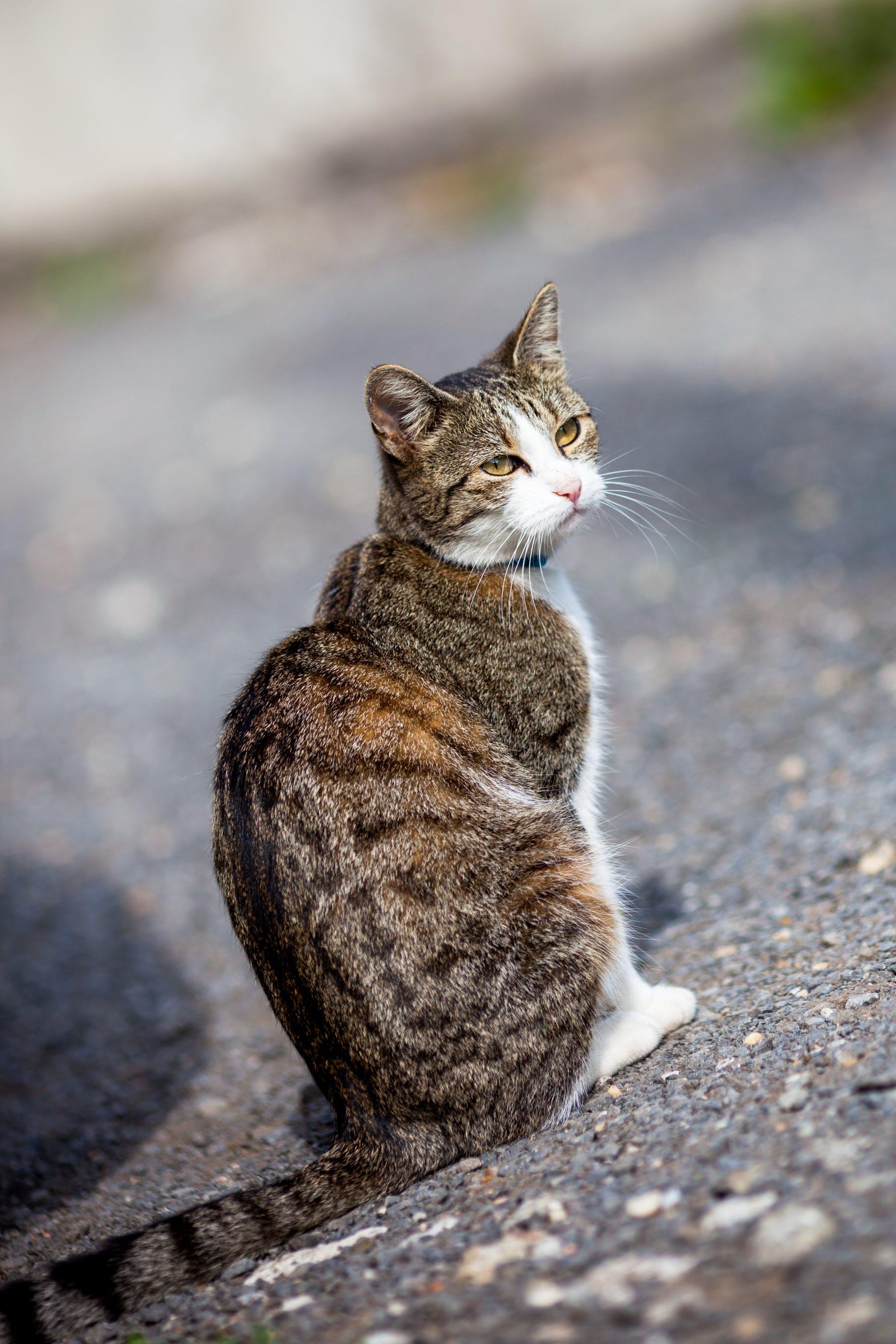 Kostenloses Stock Foto zu gespeicherte katze, katze, katzengesicht, streunende katze
