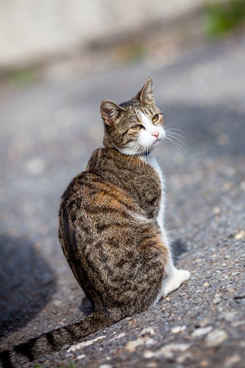 Ingyenes stockfotó kóbor macska, macska, macskaarc, mentett macska témában