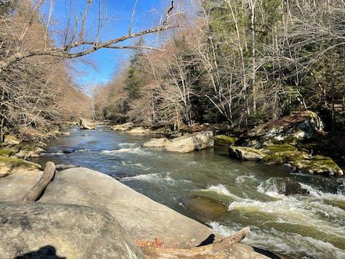 Free stock photo of creek, hiking, nature