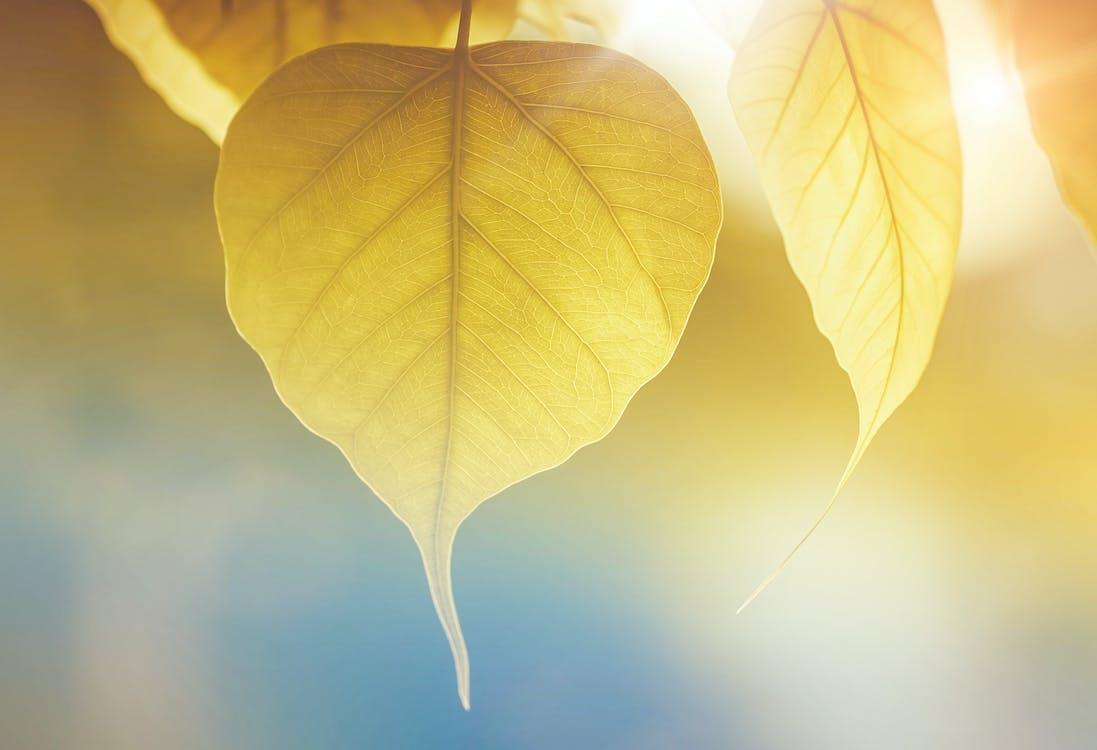 Ilmainen kuvapankkikuva tunnisteilla abstrakti, auringonvalo, kasvikunta