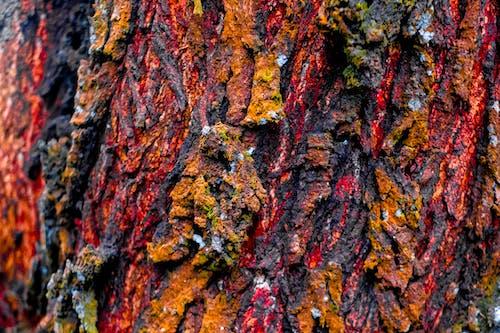 Photos gratuites de aboiement, ancien, arbre