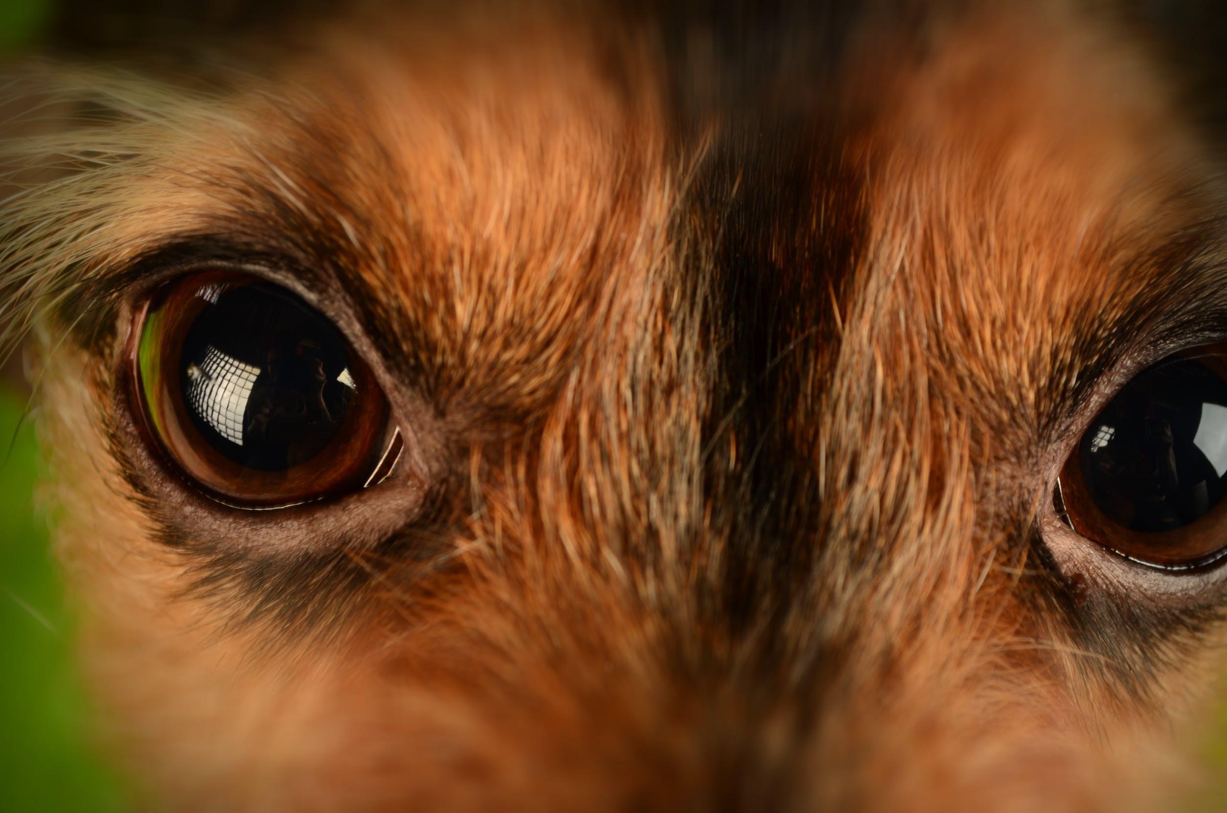 Brown and Black Animal Eyes