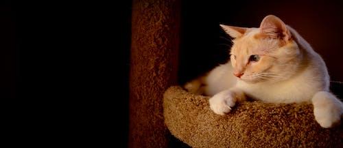 Gratis arkivbilde med dyr, huslig, katt, kjæledyr