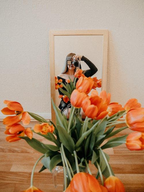 Free stock photo of birthday, bouquet, bulb