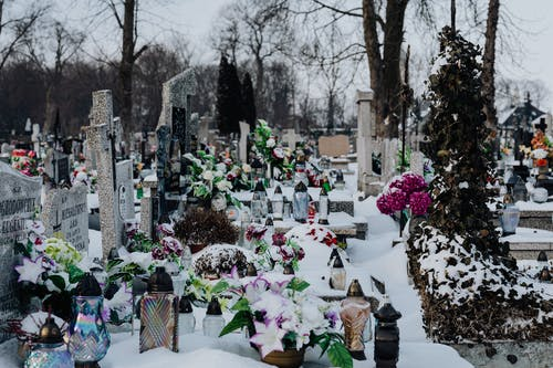 Free stock photo of cemetery, city, flower