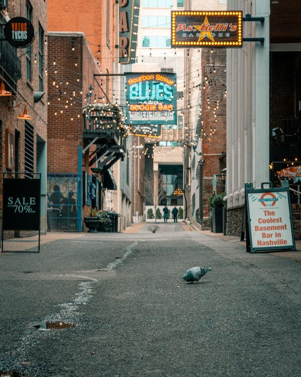 Free stock photo of alley, architecture, bird