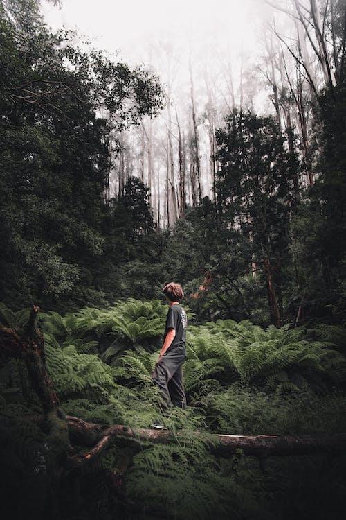 Kostnadsfri bild av Australien, bakgrund, barrträd