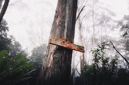 Kostnadsfri bild av Australien, bakgrund, bark
