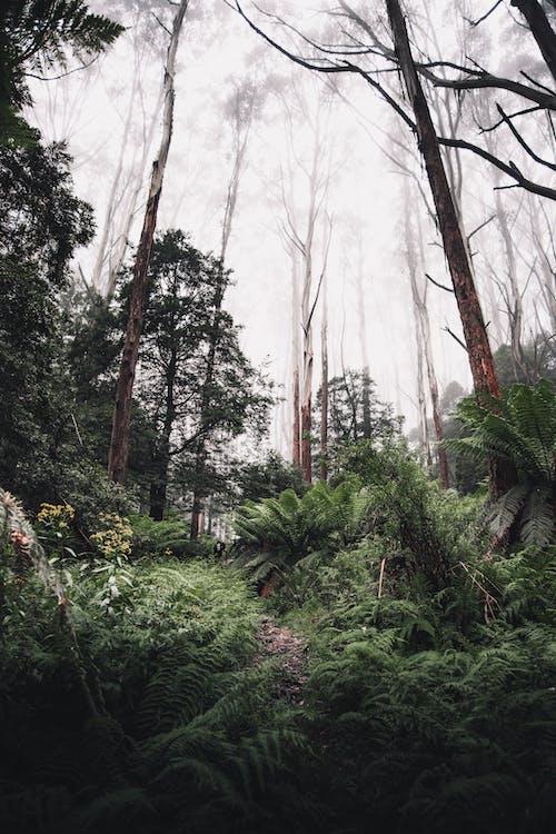 Kostnadsfri bild av Australien, bakgrund, berg