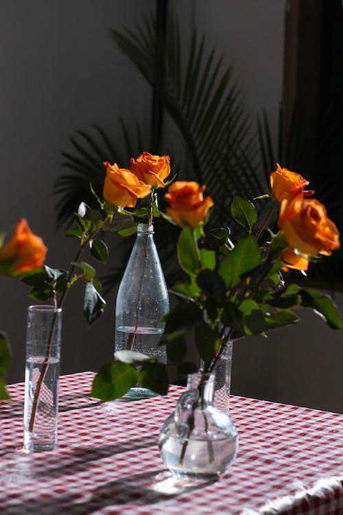 Immagine gratuita di acqua, arancia, arancione