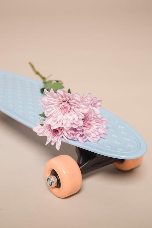 Fresh Chrysanthemum flowers placed on skateboard in studio