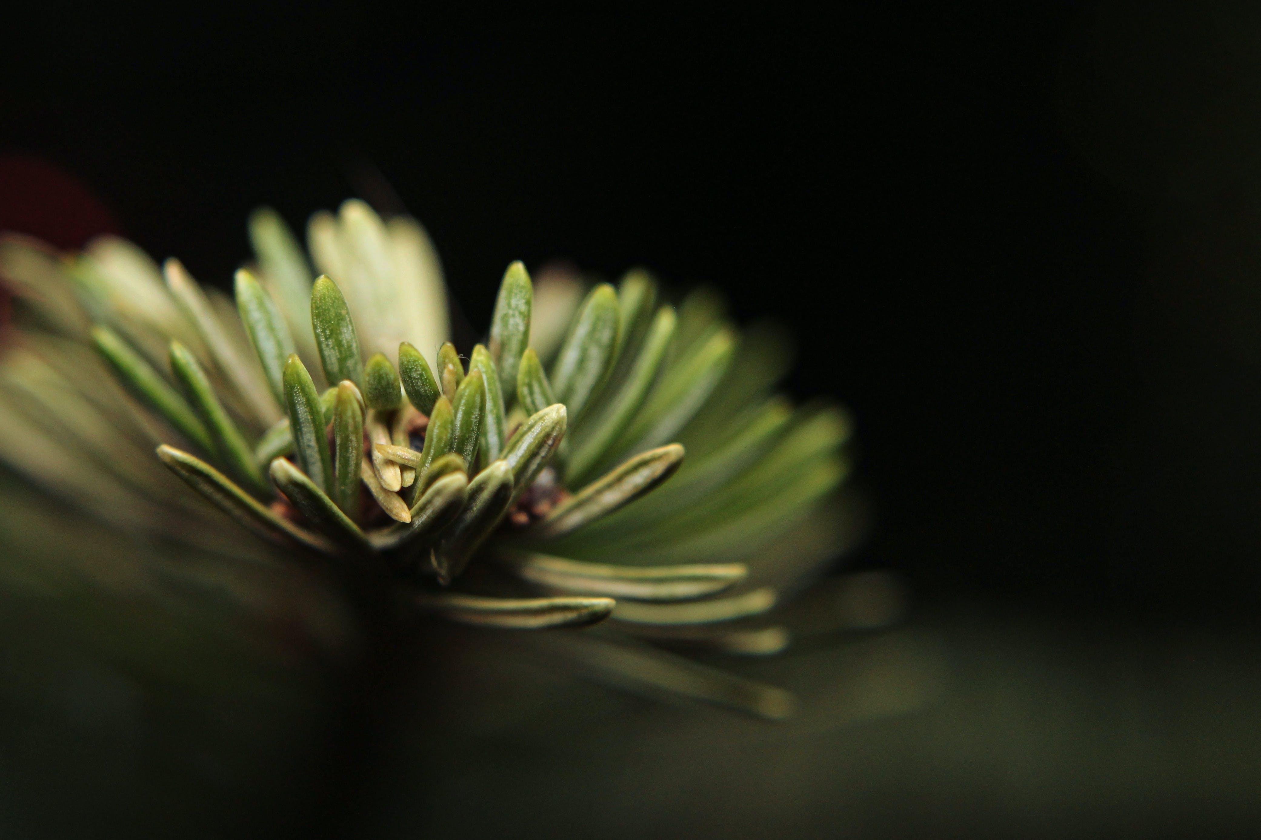 Kostenloses Stock Foto zu natur, pflanze, blätter, baum