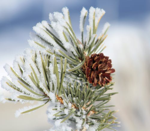 Green and Orange Petaled Plant Catching Ice