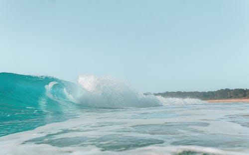 Immagine gratuita di acqua, acqua di mare, albero