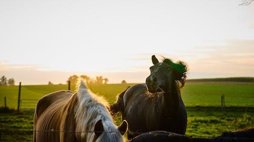 Kostenloses Stock Foto zu desktop hintergrundbilder, hd wallpaper, pferd