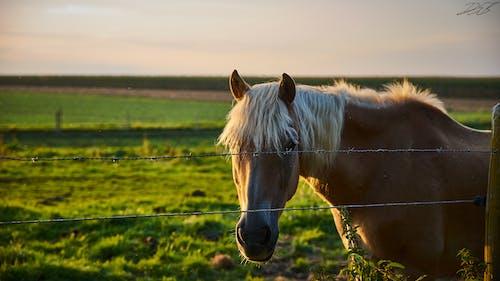 Kostenloses Stock Foto zu desktop hintergrundbilder, halbwildes pferd, hd wallpaper