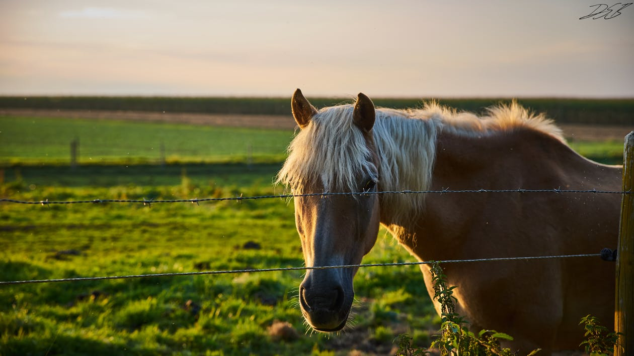 野馬, 電腦桌面, 馬 的 免費圖庫相片