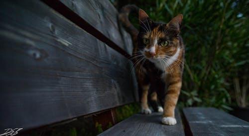Free stock photo of cat, desktop backgrounds, HD wallpaper