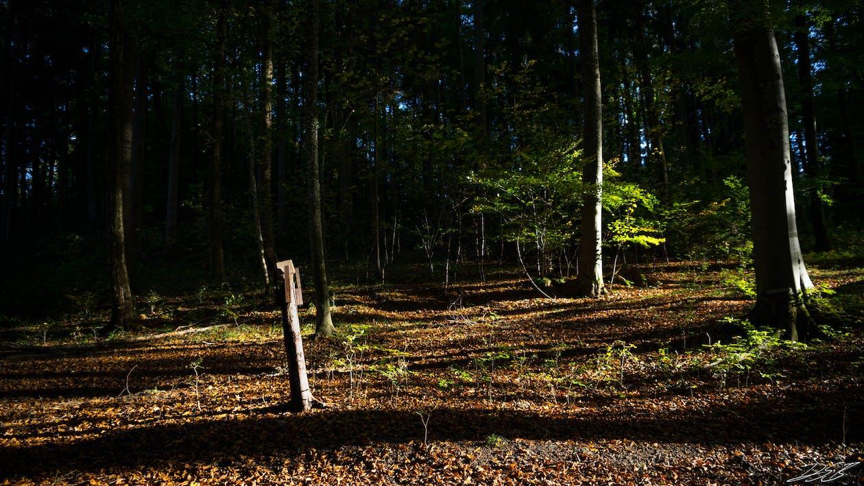 Ilmainen kuvapankkikuva tunnisteilla HD-taustakuva, metsä, työpöydän taustat