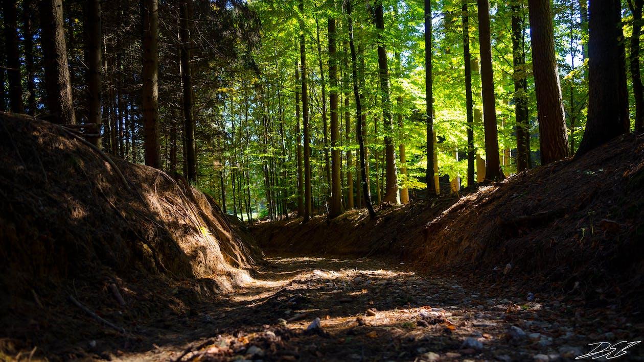 คลังภาพถ่ายฟรี ของ ป่า, พื้นหลังเดสก์ทอป, วอลล์เปเปอร์ HD