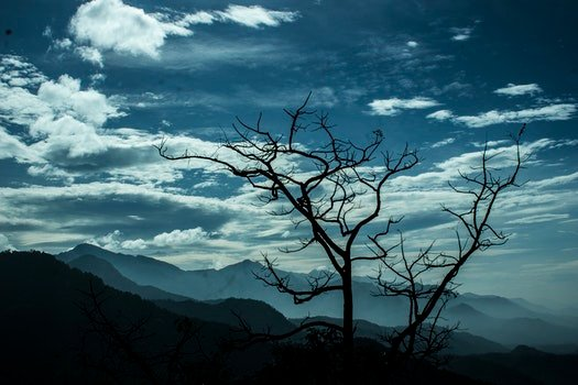 Bare Tree Near Silhouette Mountain during Daytime