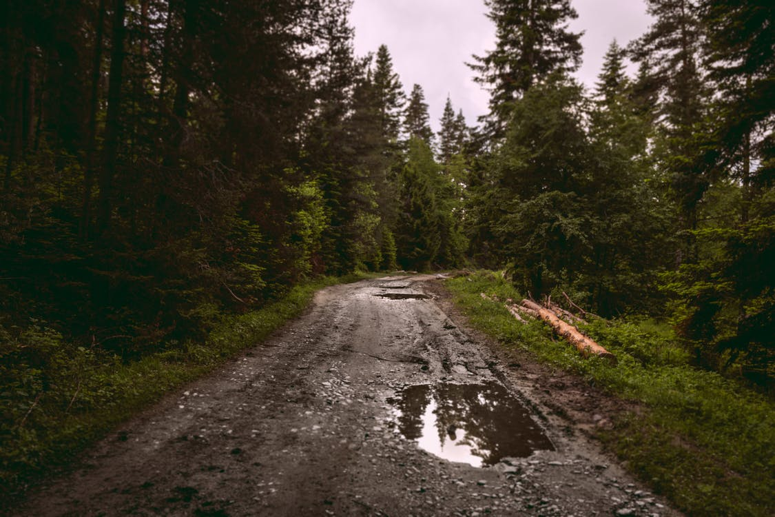 Wet narrow road going through forest with coniferous trees logs and thick grass on gloomy day in summer