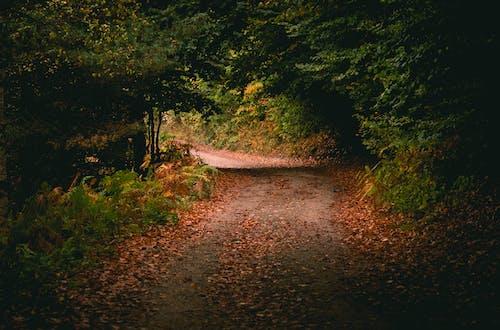 Narrow road in green forest in sunlight