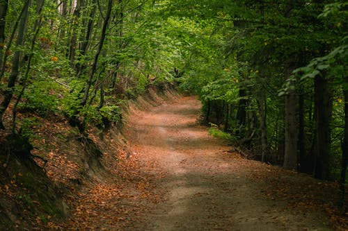 Narrow path between green trees in forest