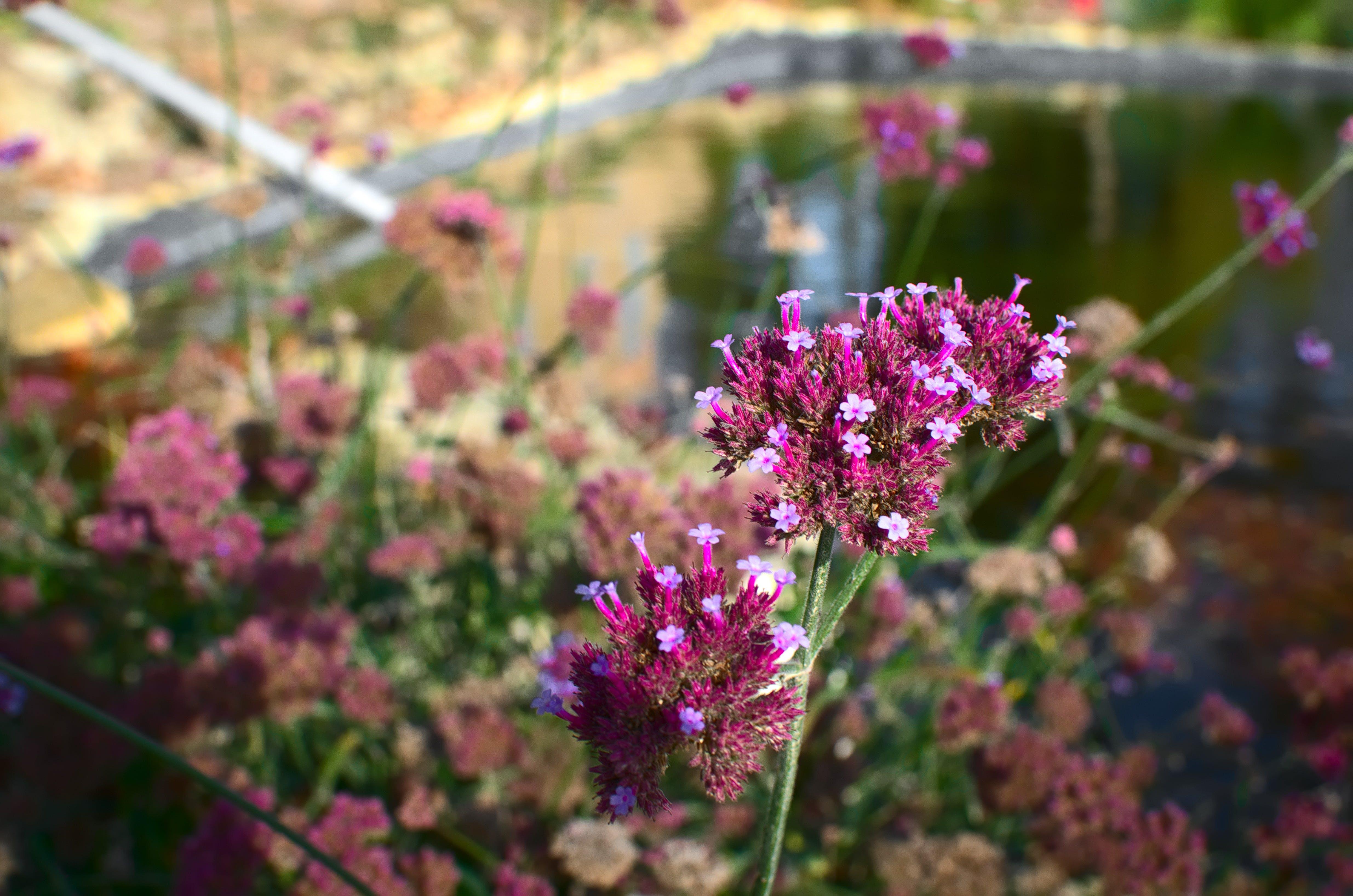 Free stock photo of botanical, bouquet, fleurs, Flore
