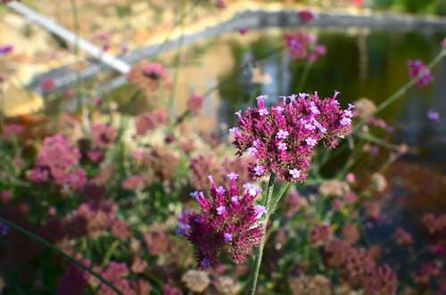Free stock photo of botanical, bouquet, fleurs