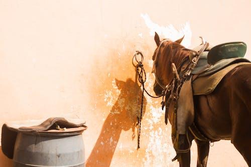 Gratis stockfoto met beest, muur, paard, paardenzadel