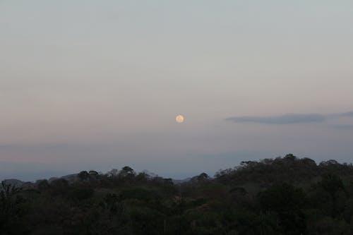 Free stock photo of dawn, full moon