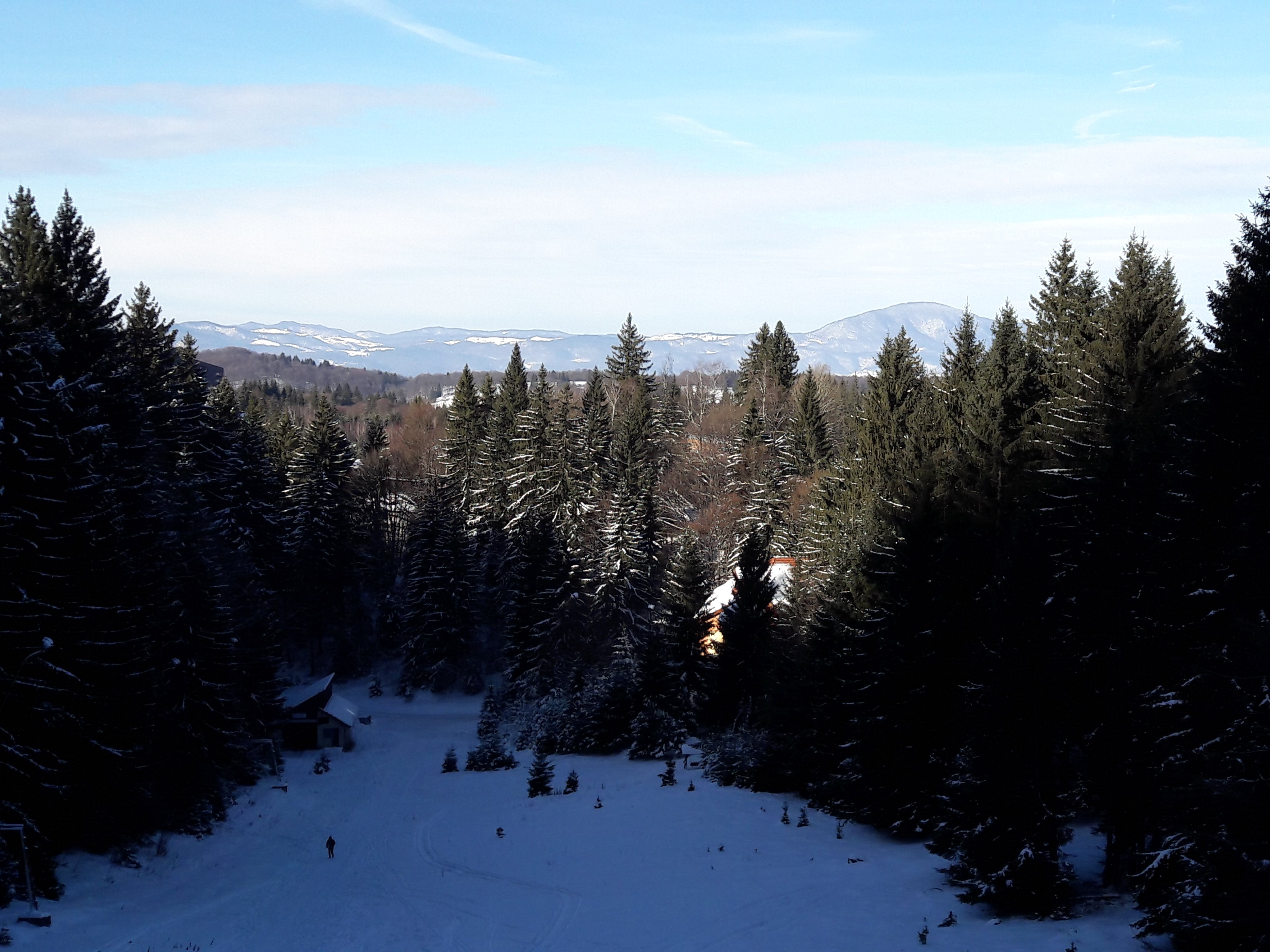 Free stock photo of mountain, romania, fir tree, poiana brasov