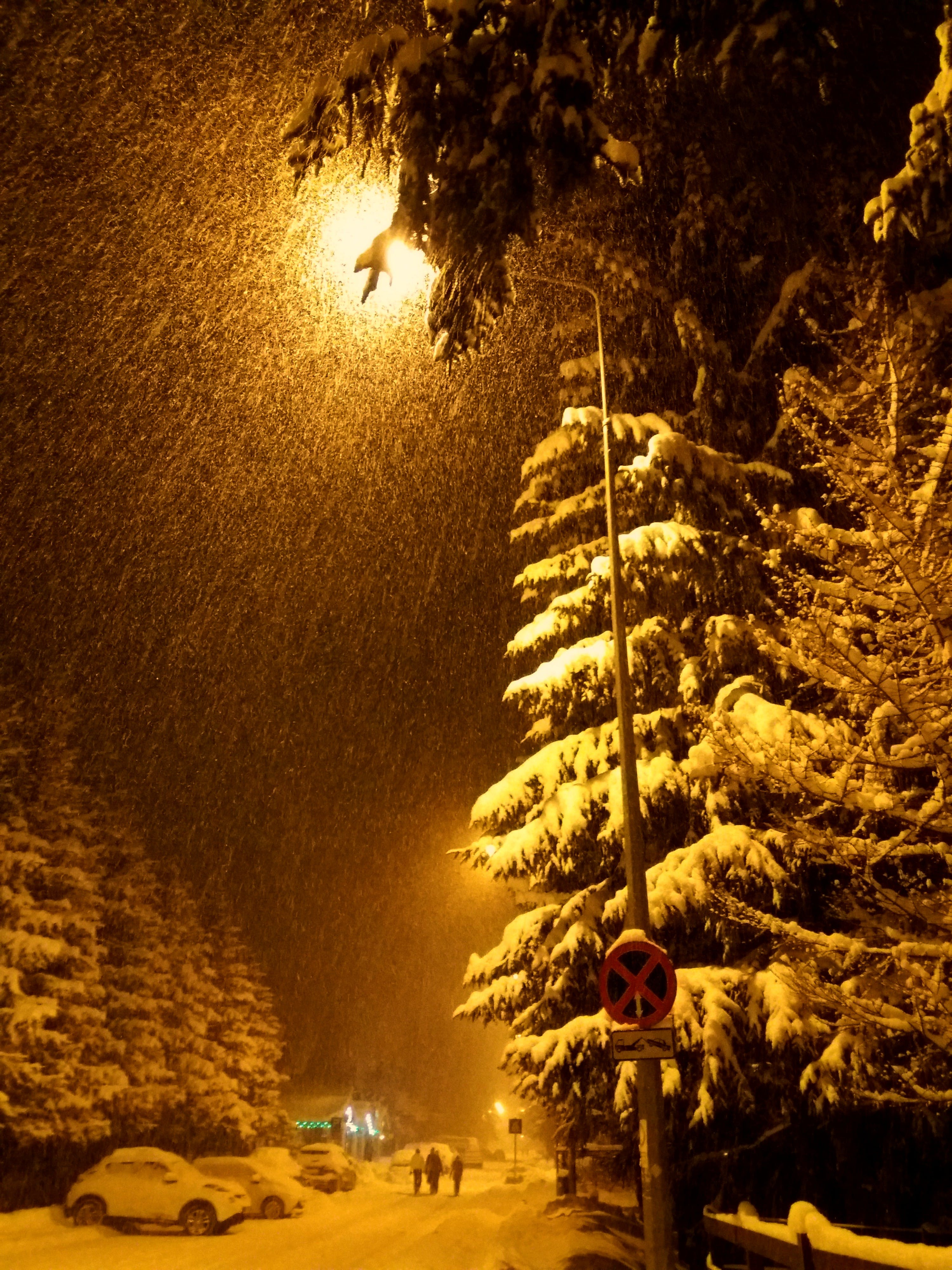 Free stock photo of winter, fir trees, heavy snow, heavy snow in the night