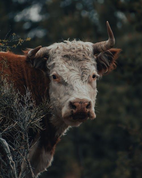 Free stock photo of alaska, animal, appalachia